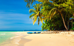 Tropical sandy beach overgrown green palm tree with clear sea water on background blue sky Royalty Free Stock Image