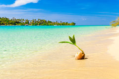 Tropical sandy beach overgrown green palm tree with clear sea water on background blue sky Royalty Free Stock Photography