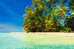 Tropical sandy beach overgrown green palm tree with clear sea water on background blue sky Stock Photo