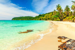 Tropical sandy beach overgrown green palm tree with clear sea water on background blue sky Royalty Free Stock Images