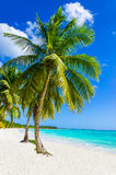 Tropical sandy beach with palm tree. On Caribbean island stock images