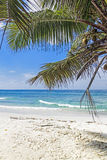 Tropical sandy beach with palm tree leaves Stock Photography