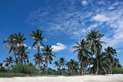 Tropical sandy beach with palm trees Stock Photography