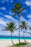 Tropical sandy beach with palm trees, Caribbean Stock Photos
