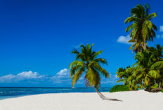 Tropical sandy beach with palm trees stock photos