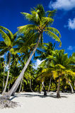 Tropical sandy beach with palm trees Royalty Free Stock Photos