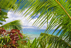 Tropical scene Royalty Free Stock Image