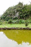 Tropical scene around Vinales valley. In Cuba Stock Photos