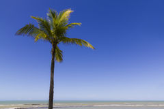 Tropical scene in Bahia - Brazil Royalty Free Stock Photography