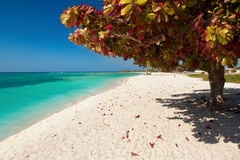 Tropical scene of Bay beach. At the beautiful Caribean island Stock Image