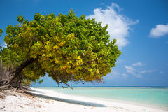 Tropical scene of bay beach. At the beautiful Indian island Agatti Royalty Free Stock Images