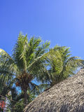 Tropical scene at Granada`s islands. Granada, Nicaragua Royalty Free Stock Photo