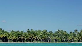 Tropical scene with huge palms and blue sea. Panoramic view of island with many palm trees and clear blue sea stock footage