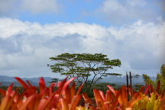 Tropical scene in Oahu, Hawaii Royalty Free Stock Image