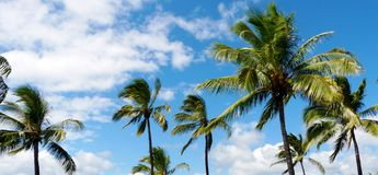 Tropical scene with palm trees. And a blue sky Royalty Free Stock Images