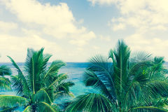 Tropical scene palm trees and fronds, ocean and sky. Retro effect faded colors in tropical scene palm trees and fronds swaying in breeze over ocean  distant Royalty Free Stock Photo
