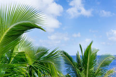 Tropical scene palm trees and fronds, ocean and sky. Tropical scene palm trees and fronds swaying in breeze over ocean with fronds breaking distant horizon and Stock Images