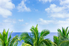 Tropical scene palm trees and fronds, ocean and sky. Tropical scene palm trees and fronds swaying in breeze over ocean with fronds breaking distant horizon and Royalty Free Stock Photo