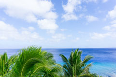 Tropical scene palm trees and fronds, ocean and sky. Tropical scene palm trees and fronds swaying in breeze over ocean  distant horizon and below sky Stock Photo