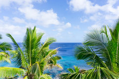 Tropical scene palm trees and fronds, ocean and sky. Turquoise ocean through tropical palm trees and fronds swaying in breeze over ocean  distant horizon and Stock Image