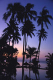 Tropical scenery on beach Stock Photos