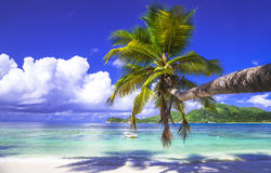 Tropical scenery. Beautiful beach scenery with palm tree royalty free stock photography