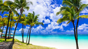 Tropical scenery. Beautiful palm beach with turquoise waters, Ma Stock Photography