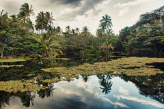 Tropical scenery reflecting in water Royalty Free Stock Photography