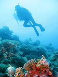 Tropical scuba diving adventure. Underwater photo of scuba divers exploring a pristine tropical coral reef on a paradise vacation adventure Stock Image