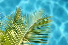 Tropical Sea. With palm trees on sunny day stock photo
