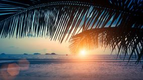 Tropical sea beach through palm leaves during amazing Sunset. Asia Royalty Free Stock Photos