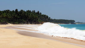 Tropical Sea Beach. Picturesque tropical sea beach in Andaman and Nicobar Islands, India, Asia Royalty Free Stock Photos