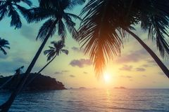 Tropical sea beach during sunset, with silhouettes of palm leaves. Asia. Tropical sea beach during sunset, with silhouettes of palm leaves Stock Photography