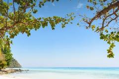 Tropical sea beach veiw from tree Royalty Free Stock Image