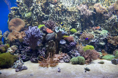 Tropical sea coral reef Royalty Free Stock Photography
