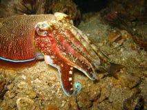 Tropical sea creature close up. Close up of colorful tropical sea creature on coral reef Stock Photos