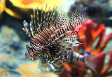 Tropical sea fish royalty free stock images