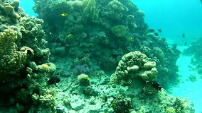 Tropical sea. Fish and clear water. Underwater life fish on the bottom. The corals and the caves. Corals. Fish and clear water. Tropical sea stock video