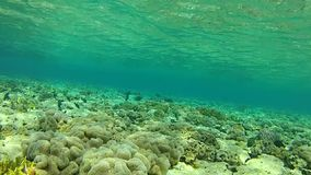 Tropical sea. Fish. Red sea Underwater life fish on the bottom. The corals and the caves. Corals. Fish and clear water. Tropical sea stock footage
