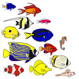 Tropical sea fish species. Colorful Tropical sea fish species with copy space Royalty Free Stock Image