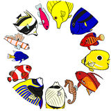 Tropical sea fishes in circle Royalty Free Stock Images