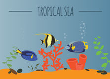 Tropical sea graphic template Stock Photo