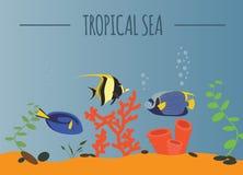 Tropical sea graphic template Stock Photo