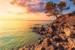 Tropical sea landscape in Costa Brava, Spain. Mediterranean nature at sunset. Tree on rocky cliff on sea coast royalty free stock image