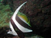 Tropical Sea Life Royalty Free Stock Photos