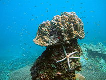 Tropical Sea Life. Underwater Photo from Andaman Beach, Thailand stock photo