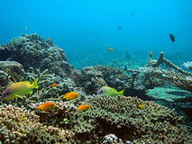 Tropical Sea Life. Underwater Photo from Andaman Beach, Thailand Royalty Free Stock Photos