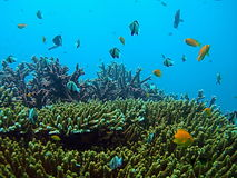 Tropical Sea Life. Underwater Photo from Andaman Beach, Thailand stock images