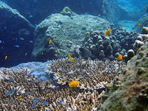 Tropical Sea Life. Underwater Photo from Andaman Beach, Thailand royalty free stock photography