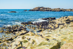 Tropical sea ocean rocky shore with stones and sunny day Royalty Free Stock Image
